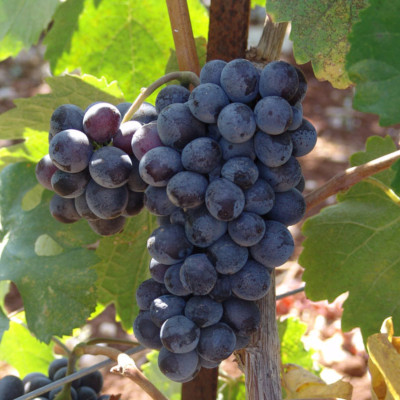 It is considered the wine soul of Crete